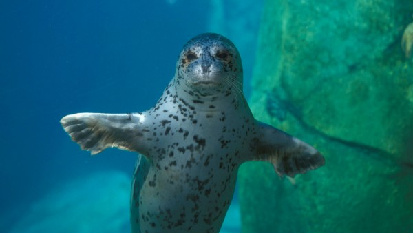 Embark on a guided tour of the Alaska SeaLife Center