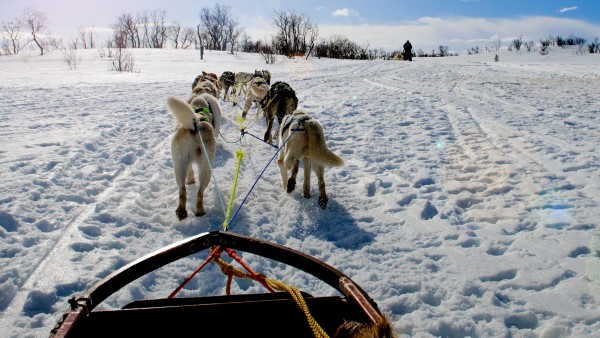 Anne Diamond interviews dog musher Thomas Wærner