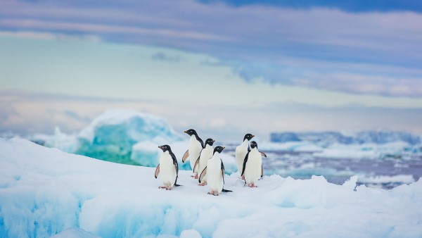 Discover our From the Arctic to Antarctica itinerary with Dr. Damon Stanwell-Smith
