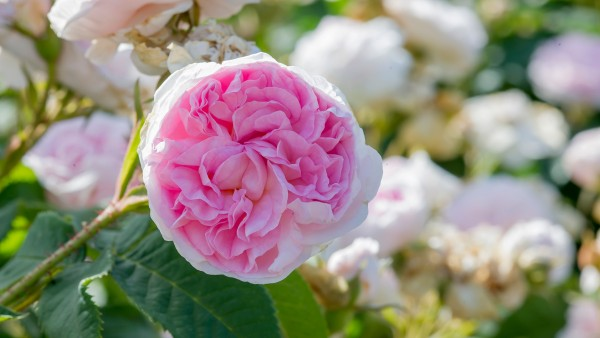 In Highclere Castle's flower gardens with Lady Carnarvon