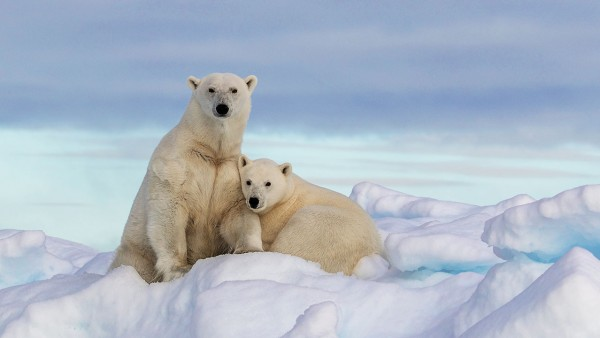 Karine explores the flora and fauna of the Arctic and Antarctica