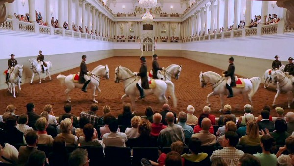 Vienna's Famed Lipizzaner Stallions