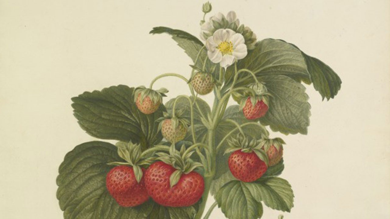 Revisit the Royal Horticultural Society's Lindley Library